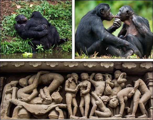Bonobos & älskogsskulpturer